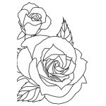 Sketched Rose - KaiserCraft Embossing Folder